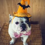 5 Halloween Safety Tips Every Pet Owner Should Know