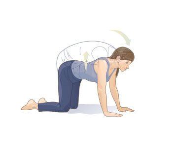 Cat-camel back stretch