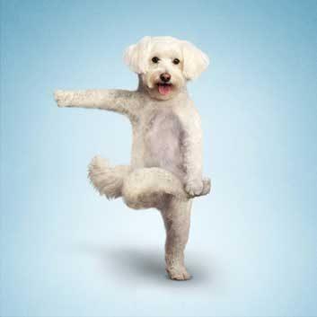 yoga dogs 1