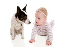 How to introduce your pet to a new baby