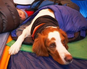 What to know before you camp with your dog