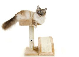 How to keep your indoor cat fit