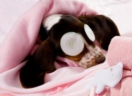Are our pets overpampered?