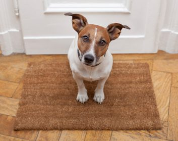 doormat dog cute home