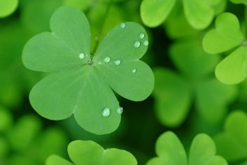 four leaf clover green St. Patricks's Day