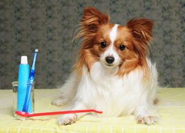 Oral health tips for your pet