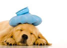 4 signs your pet might be sick
