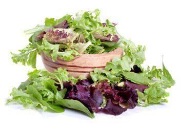 salad lettuce