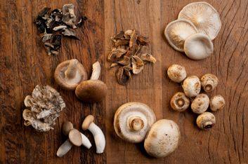mushroom varietites