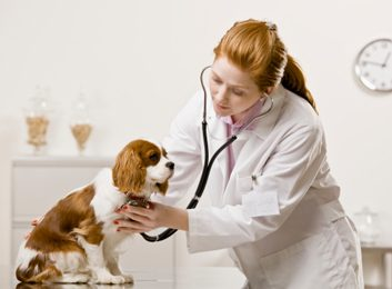 How to have a happier vet visit