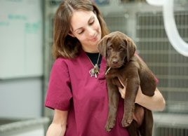 6 vaccines your dog may need