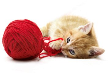 kittenwithyarn