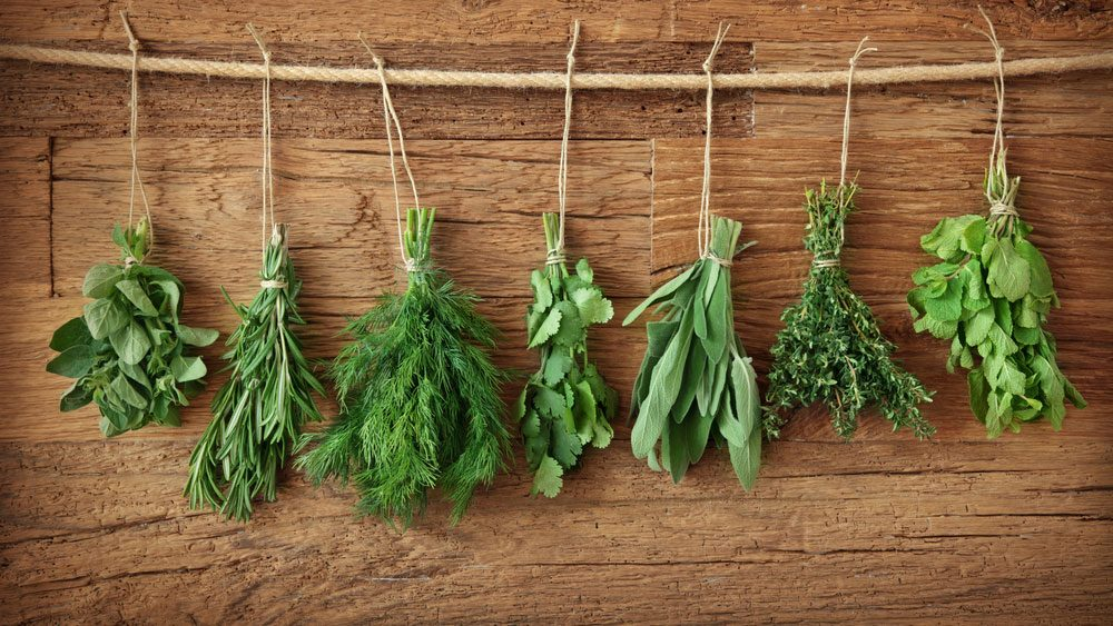 hanging herbs, ready to dry