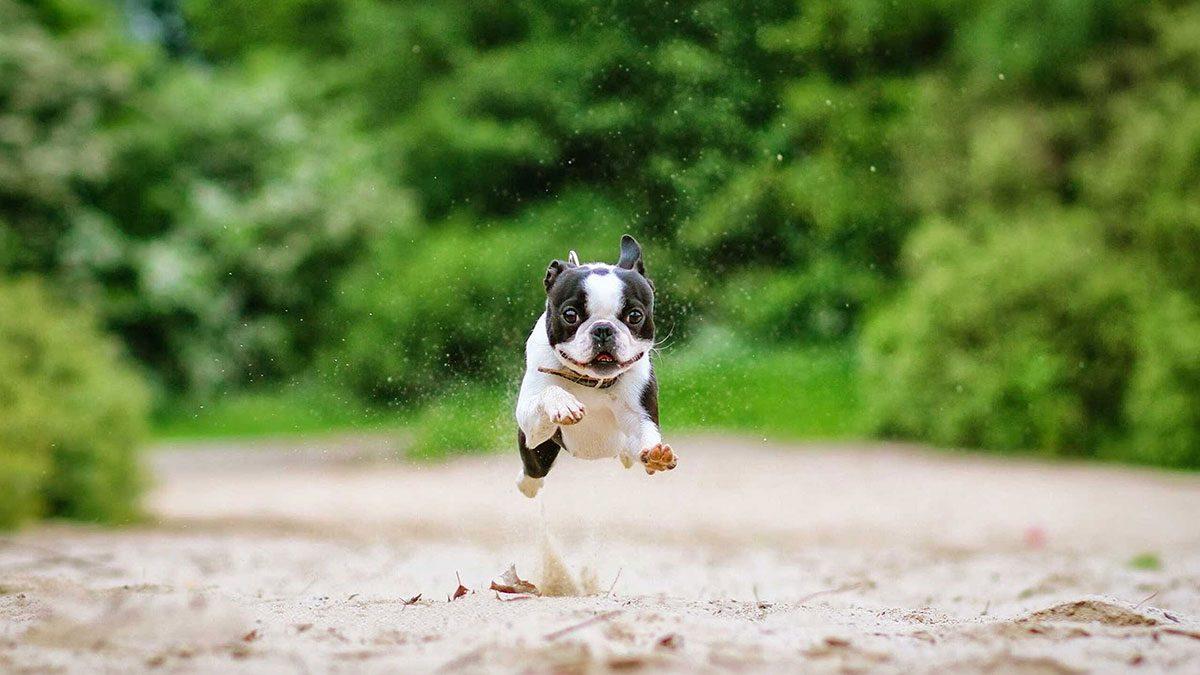 animal workouts Canada, dog running with Dog Runnin