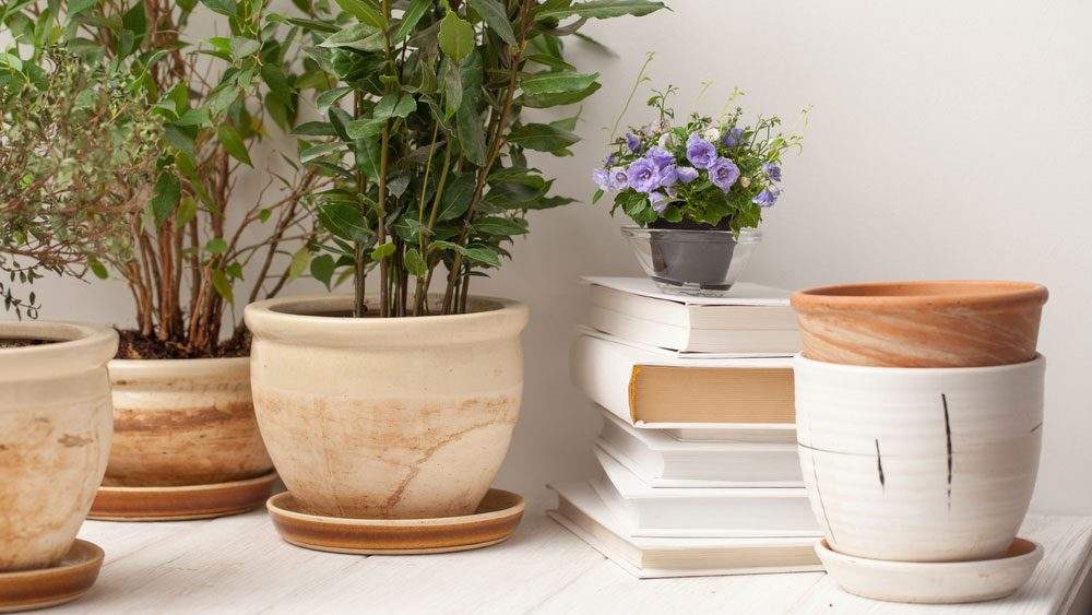 home giving you anxiety plants, potted plant garden on a counter