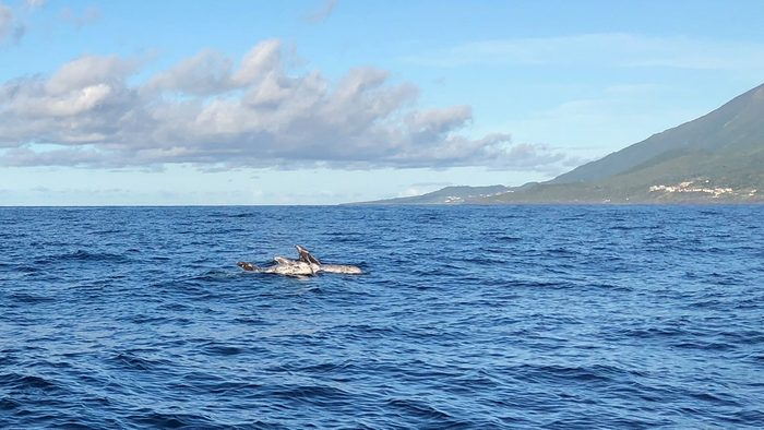 beautiful azores islands whale watching with futurismo