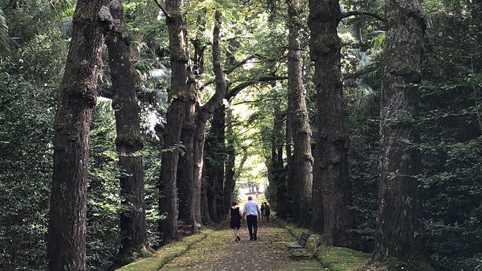 beautiful azores islands sao migue terra nostra park