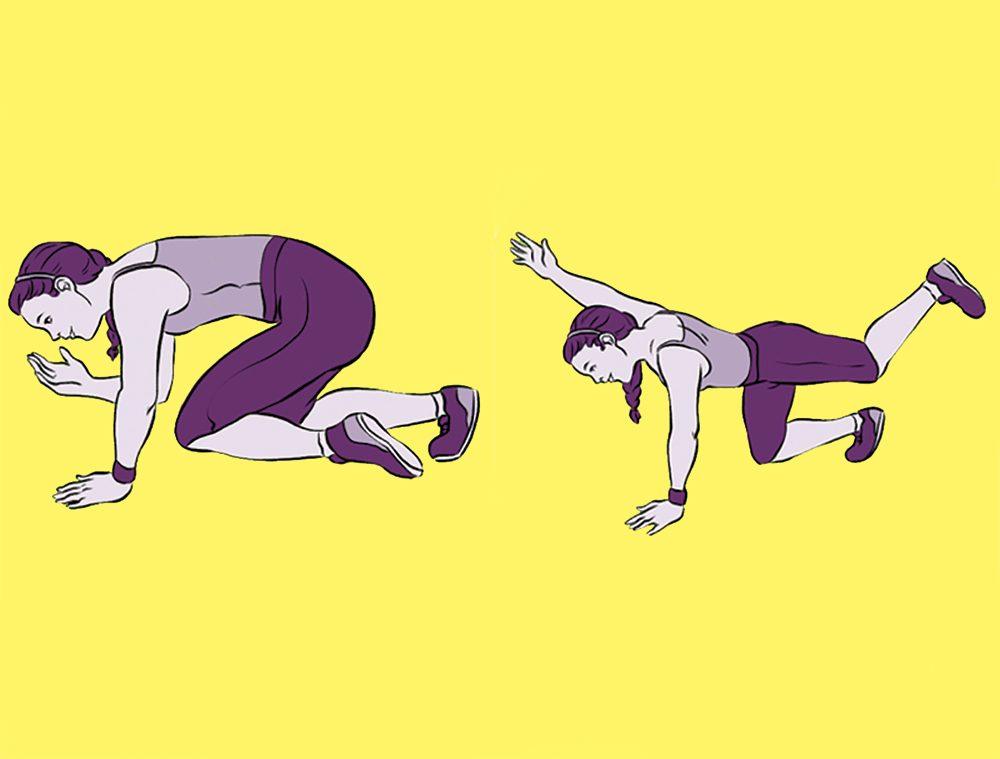 bird dog exercise