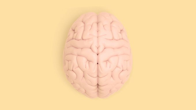 Memory, human brain