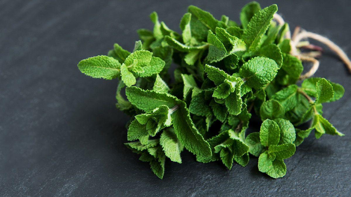 Plants, mint