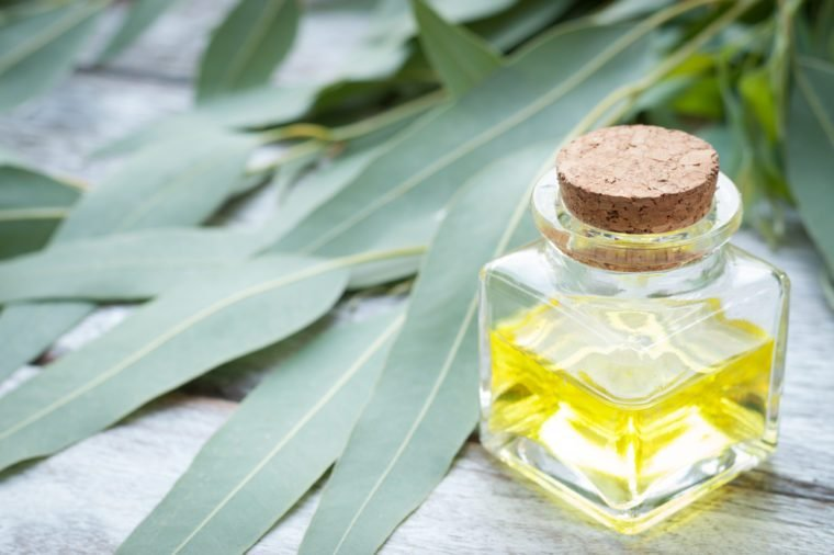 Home Remedies, eucalyptus oil