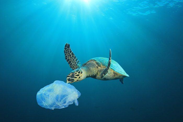 Plastic pollution in ocean problem. Sea Turtle eats plastic bag