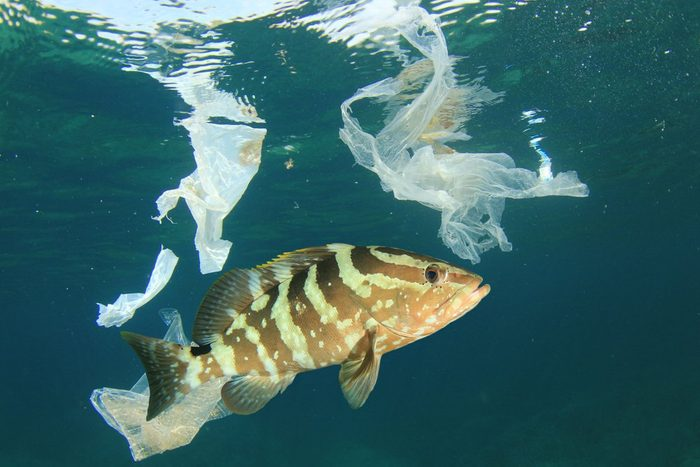 Plastic bags pollution in ocean with fish