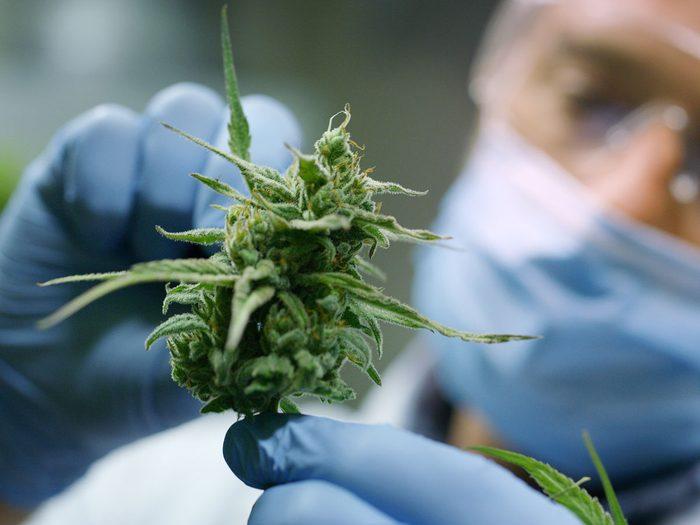 CBD oil cannabis