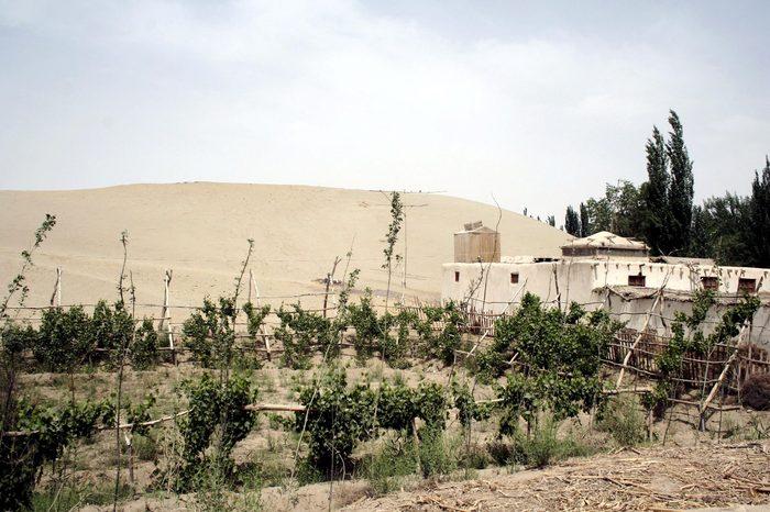 China Desert Xinjiang - Jun 2008