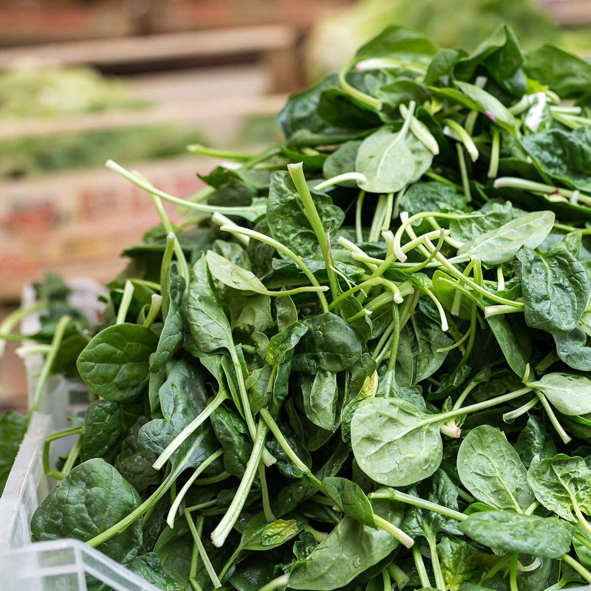 Fresh green Spinach at the farmers market; Shutterstock ID 438669850; Job (TFH, TOH, RD, BNB, CWM, CM): TOH