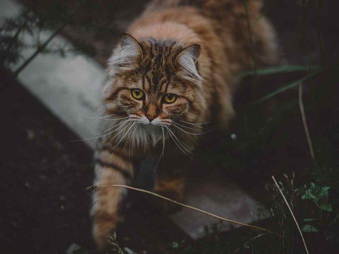 indoor or outdoor cat