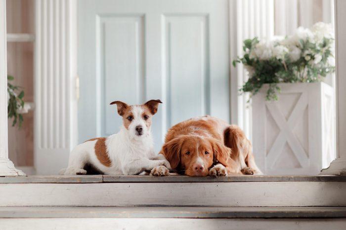 adopting an older dog