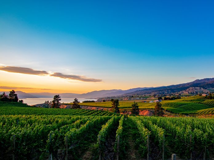 Osoyoos wineries