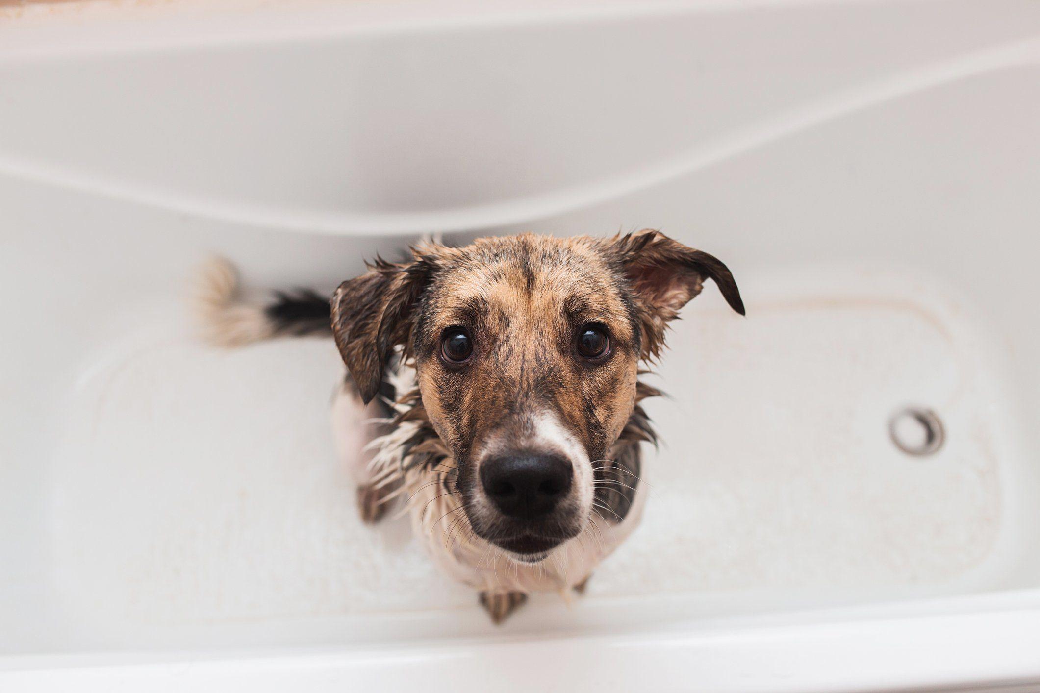 dog in bath tub looking up at camera