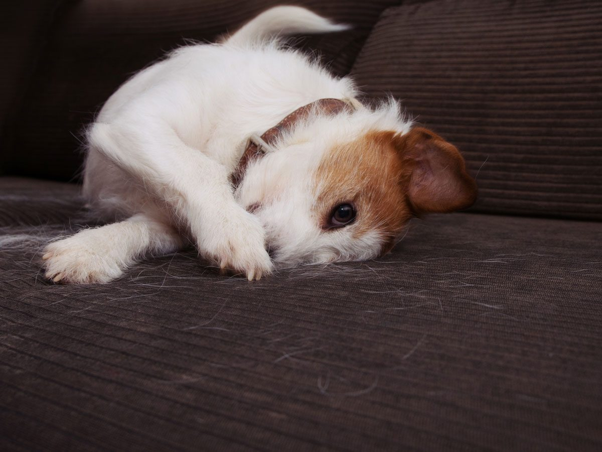 cleaning tips for pet owners