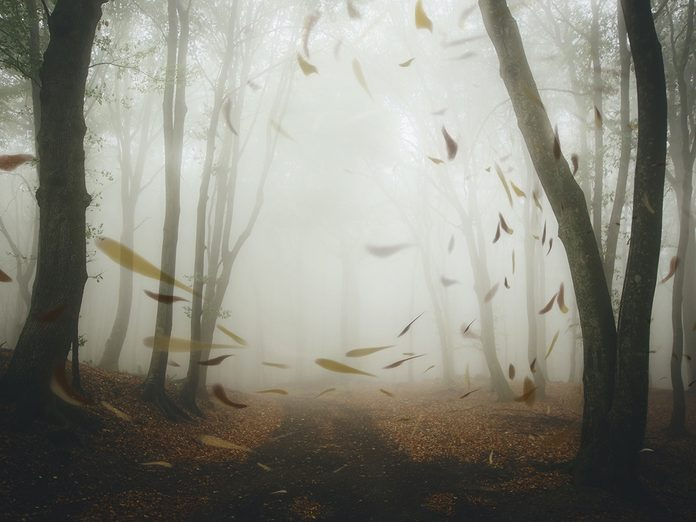 rumination obsessive thoughts   windy fall day   anxiety and depression
