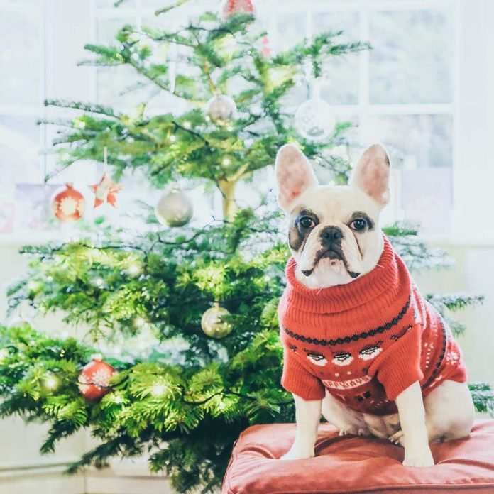 dog dangers | Dog by a Christmas tree